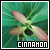 Plants: Cinnamon: